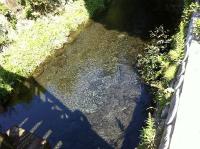 白川水源の川