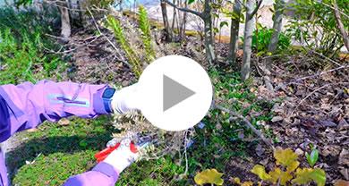 『マートル』常緑低木の冬のお手入れ メイン写真