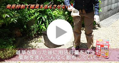 『発芽抑制剤』で雑草対策 メイン写真