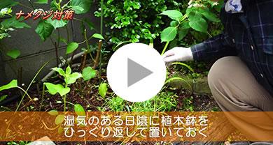 害虫対策『ナメクジ・ダンゴムシ』 メイン写真