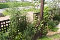格子木製フェンス フェンス