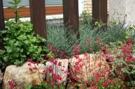 赤い花が似合うロックガーデン ガーデニング