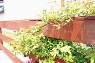 フェンスの隙間からこぼれる植物 ガーデニング