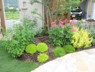可愛らしいイメージの植栽 ガーデニング
