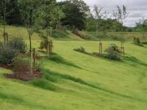 芝生伸びかた1