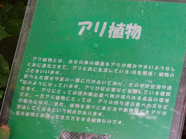 DSC00777