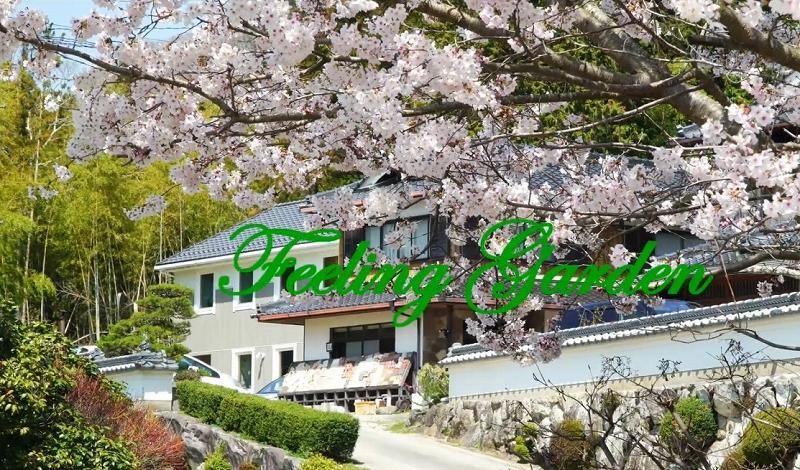 事務所と桜